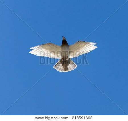 a dove on a blue sky . In the park in nature