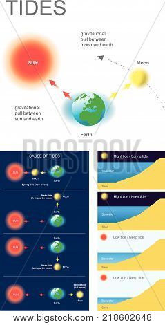 Tides are the rise and fall of sea levels caused by the combined effects of the gravitational forces exerted by the Moon and the Sun and the rotation of the Earth