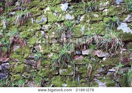 old stone wall texture with green moss