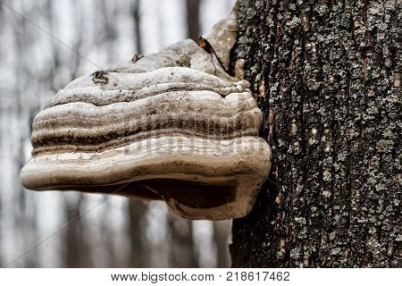 Green forest background with orange mashroom on the tree trunk with water drops