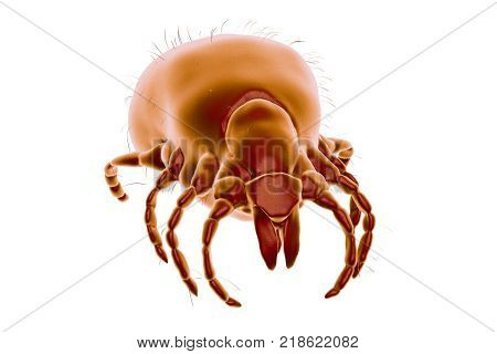 Tick Ixodes, an arthropod responsible for transmission of bacterium Borrelia burgdorferi that causes Lyme disease, it also transmits viral encephalitis and other infections, 3D illustration