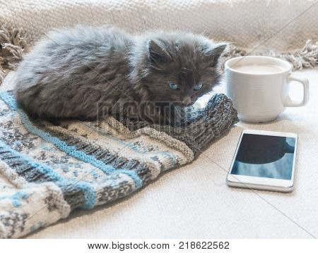 Gray fluffy kitten, coffee and a phone on a white surface