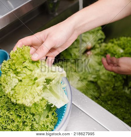 Food hygiene at a restaurant. Cook washing green salad in a kitchen sink before adding it to a meal.