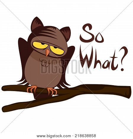 So What? (careless owl doesn't worry much)