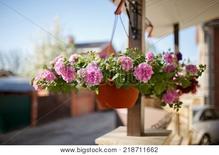 Flower pot dangling from the roof of the house