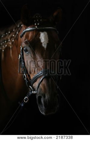 Portrait Of The Horse In A Dark Stable