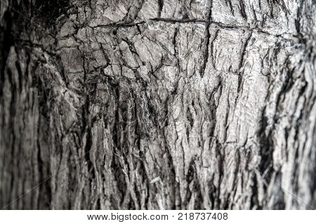 Surface Texture And Trenches On The Bark