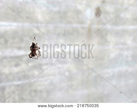 Spider hanging on a web close up