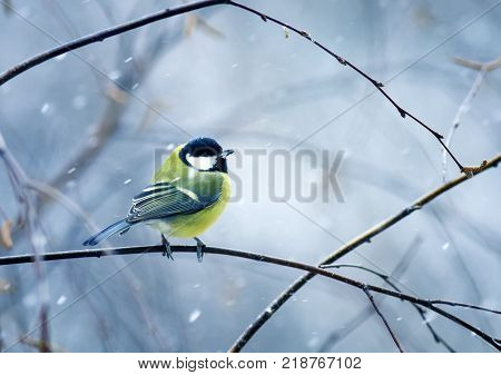 funny nice bird the bird sits hunched on a branch in winter forest in the snow