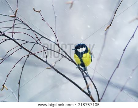 nice bird the bird sit on a branch in winter forest in the snow