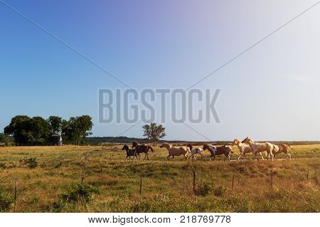 Horses in a ranch with an old barn in the background in rural Texas at sunset USA; Concept for travel in the USA and in Texas