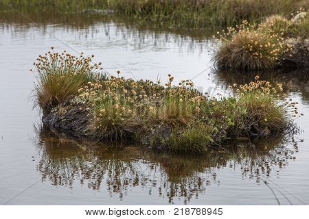 wildflowers and mosses on tiny island in Newfoundland pond