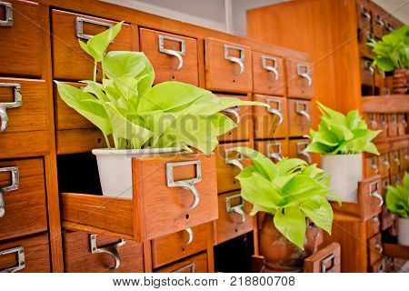 Tree on Open wooden cabinet boxes in Library or Filing archive reference card catalog. Knowledge base and education concept Selective focus poster