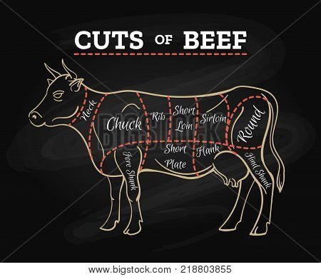 Cow meat steak diagram. Cow butcher cut beef chalkboard scheme for restaurant menu poster, vector illustration