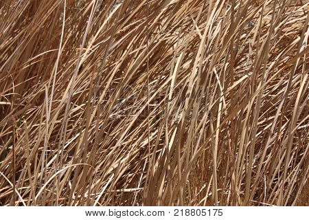 Background of dead grass and weeds in the scorching Nevada desert