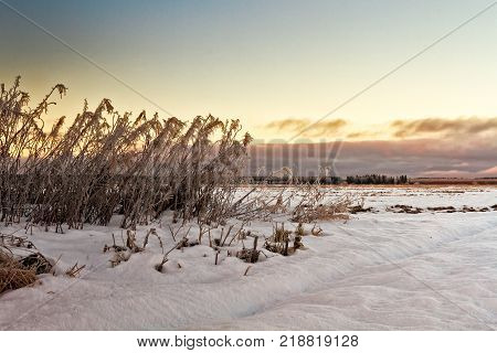Frozen willowherbs by the winter fields at the Northern Finland. The sun sets early at this time of the year and colors the sky beautifully.