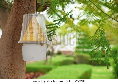 Insect trap hanging on tree in park