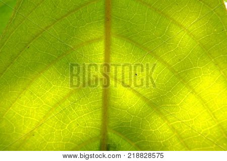 close up of green leaf during autum.