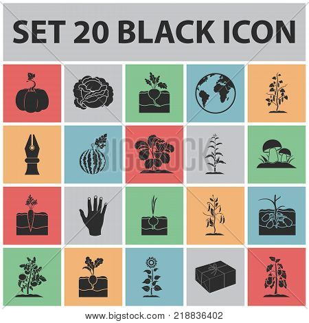 Plant, vegetable black icons in set collection for design. Garden and harvest vector symbol stock  illustration.