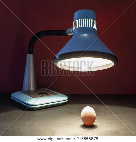 The lamp warms the egg of a new business idea. Picture is the concept of an incubator of ideas and creative method for startup