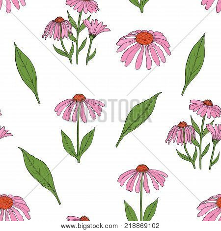 Elegant botanical seamless pattern with gorgeous echinacea flowers, stalks and leaves on white background. Flowering herb hand drawn in vintage style. Vector illustration for wallpaper, textile print