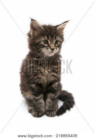 the little sad kitten isolated on white background