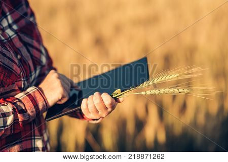 Smart farming using modern technologies in agriculture. Female agronomist farmer with digital tablet computer in wheat field using apps and internet in agricultural production and crop protection selective focus