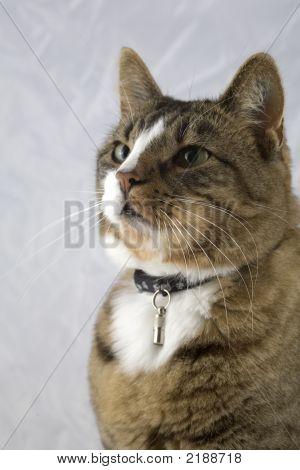Cat In Left Profile