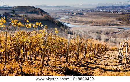 Langhe vineyard seen by Barbaresco Piedmont with Tanaro river