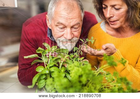 Senior couple preparing food in the kitchen. An old man and woman inside the house, smelling herbs.