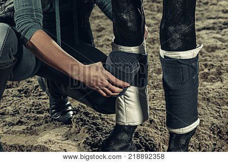 Bandaging horses' legs with a bandage. The female hands close up