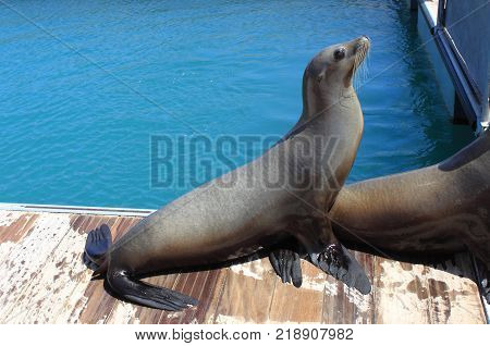 A seal in the poolside in Spain