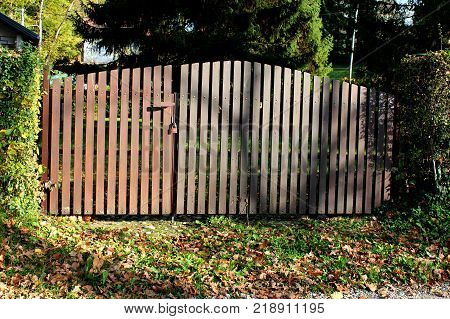 Locked with padlock wooden picket fence doors mounted in overgrown hedge with fallen autumn brown leaves in front and trees in background