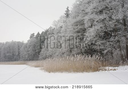 Winter landscape. Winter wonderland with forest snowy winter trees. Cold toned winter landscape scene - snowy winter forest with winter trees covered with frost. Winter forest landscape background