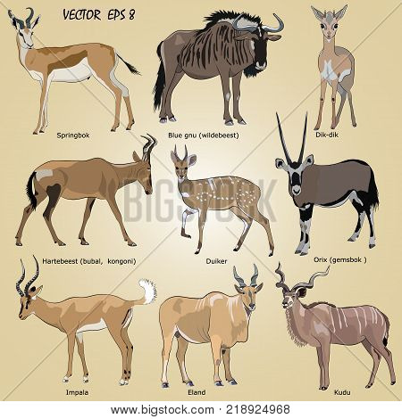 a set of realistic African antelope - oryx eland hartebeest dik-dik impala springbok wildebeest duiker kudu blue gnu isolated. Each object is located on a separate layer