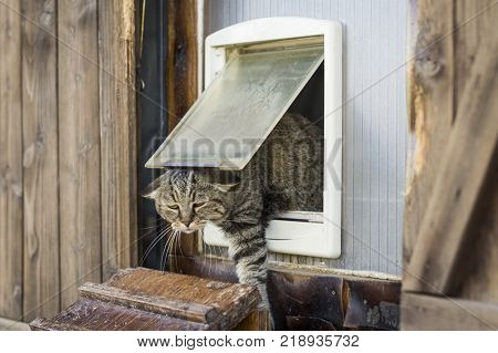 Funny scene of a cat escapes from a cat flap and goes outside