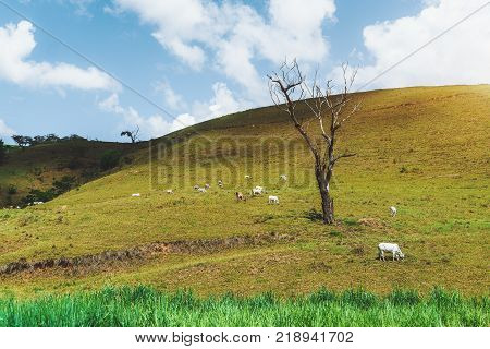 Beautiful landscape with bright summer green and yellow meadow with native grasses dry tree and multiple grazing mammals on it; blue sky with clouds behind; looking like popular desktop backgrounds