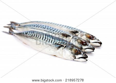 Fresh Whole Mackerel Fish Isolated On White Background
