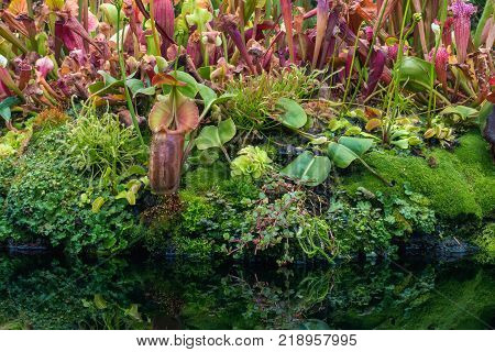 Small garden of nepenthes and various plant in the dome.