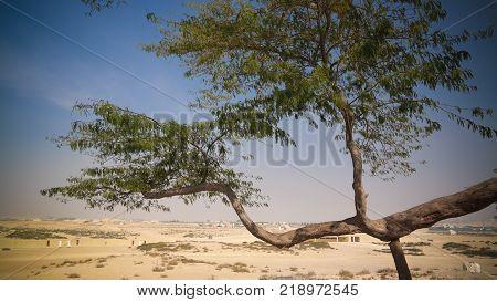 Legendary tree of life in bahrain desert poster