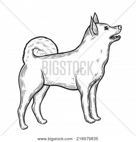 Vector hand drawn illustration with siberian husky. Eskimo dog in sketch style isolated on white