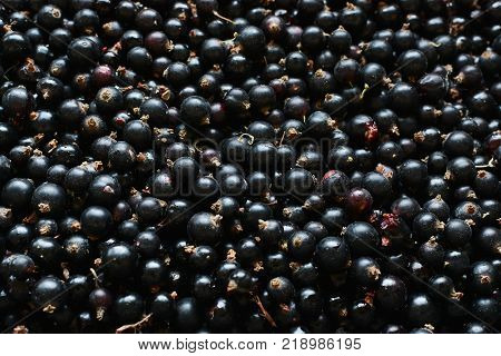 Black Currant. Background Of Berries. Fresh Organic Currant From A Rural Garden. Organic Currant Ber
