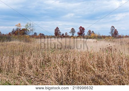 prairie grassland and oak savanna habitat at necedah wildlife refuge juneau county wisconsin