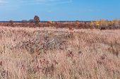 prairie grassland and oak pine savanna habitat at necedah wildlife refuge juneau county wisconsin poster