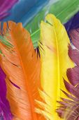 diferent animal color feathers in vertical position poster