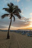 GRAN CANARIA, SPAIN - DECEMBER 10, 2017: Palm tree and sunbeds at Puerto Rico Beach in Gran Canaria, Spain. Canary Islands had 13.3 million visitors in 2016, with Gran Canaria as the second most visited, after Tenerife. poster