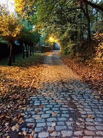 Cobblestone road in Fall. A tree lined cobblestone road in the Belgian countryside among the changing leaves of Autumn.