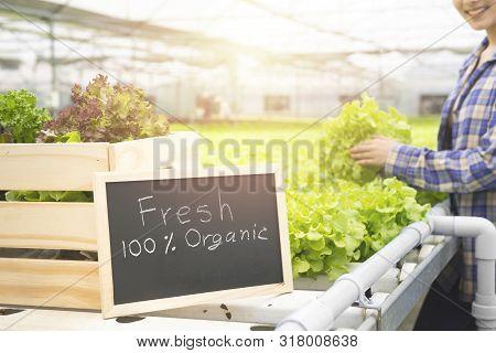Organic Vegetable Farm, Business Farmer, Healthy Food Concept,fresh From Farm Text Hand Drawn On Bla