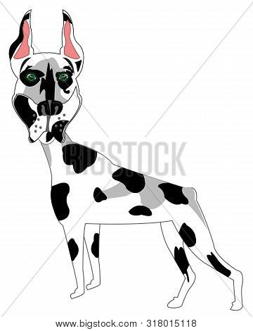 Dog Spotted Doberman On White Background Is Insulated