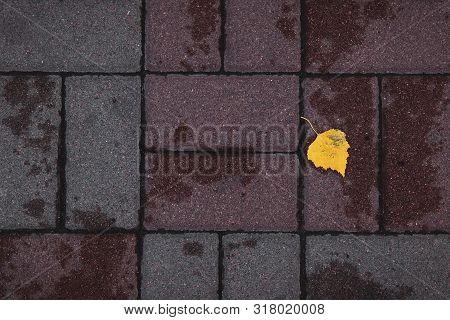 Yellow Leaf Lying On The Multicolored Pavement After The Rain. Rectangular Tile. A Nasty Day. Autumn